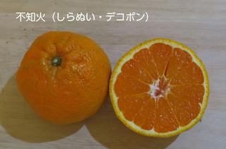 01shiranui.JPG